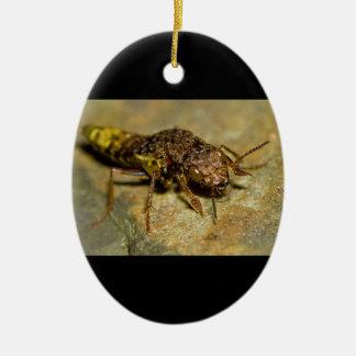Gold & Brown Rove Beetle Ceramic Ornament
