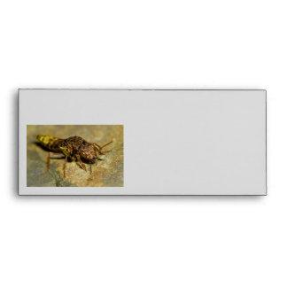 Gold & Brown Rove Beetle Envelope