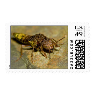 Gold & Brown Rove Beetle Postage