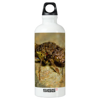Gold & Brown Rove Beetle Water Bottle