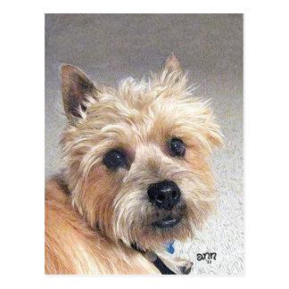 Gold Cairn Terrier Postcard