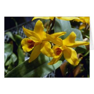 Gold Digger (Laeliocattleya) flowers Card