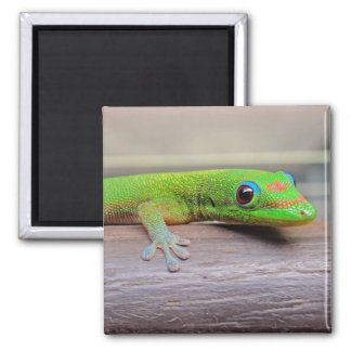 Gold Dust Day Gecko 2 Inch Square Magnet
