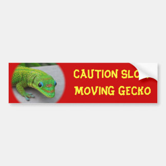 Gold Dust Day Gecko – Audition and Get Some Gecko Bumper Sticker