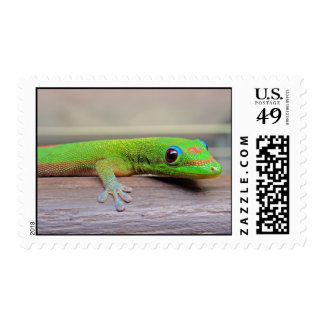 Gold Dust Day Gecko Stamps