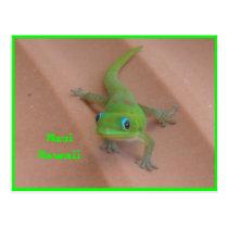 Gold Dust Day  Gecko Postcard