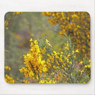 Gold Finch and Yellow Flowers Mouse Pads