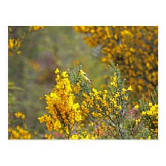 Gold Finch and Yellow Flowers Postcard