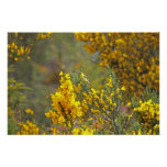 Gold Finch and Yellow Flowers Poster
