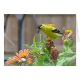 Gold Finch and Zinnias Card
