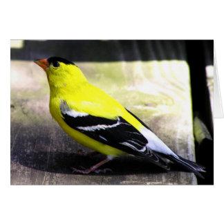 Gold Finch Card