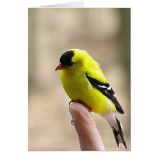 Gold Finch on My Finger Greeting Card