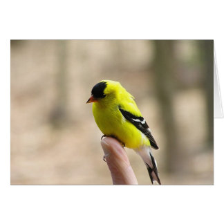 Gold Finch on My Finger Greeting Cards