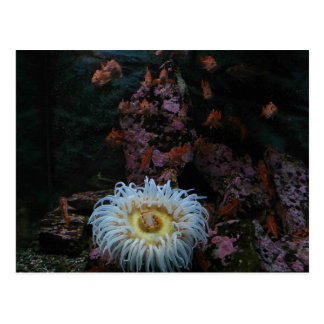 Gold Fish and Sea Anemone Post Card