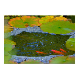Gold fish posters zazzle for Koi pond bubble