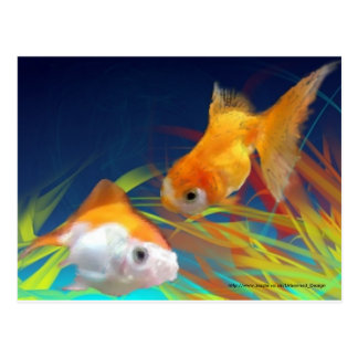 Gold fish Postcard