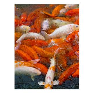 Gold Fish Swarm Postcard