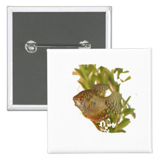 Gold Gourami Freshwater Fish With Green Buttons