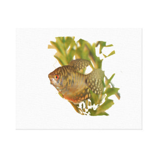 Gold Gourami Freshwater Fish With Green Gallery Wrapped Canvas