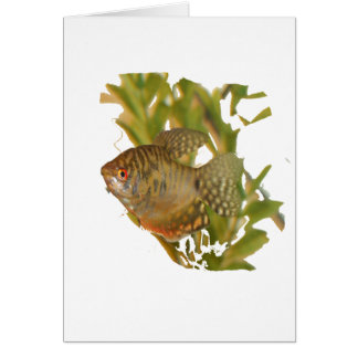 Gold Gourami Freshwater Fish With Green Card
