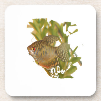 Gold Gourami Freshwater Fish With Green Coaster