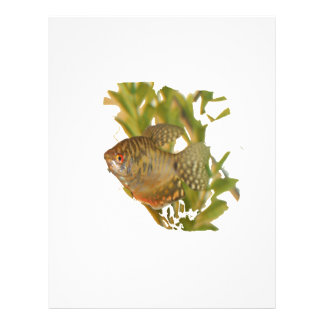 Gold Gourami Freshwater Fish With Green Flyer Design