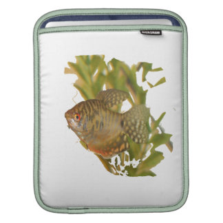 Gold Gourami Freshwater Fish With Green Sleeves For iPads