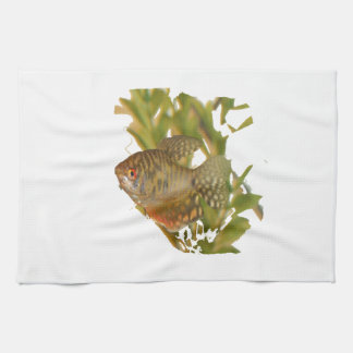 Gold Gourami Freshwater Fish With Green Hand Towels