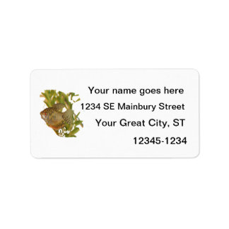 Gold Gourami Freshwater Fish With Green Personalized Address Labels