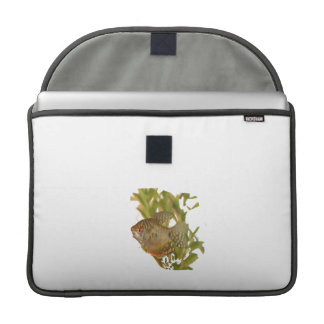 Gold Gourami Freshwater Fish With Green Sleeves For MacBooks