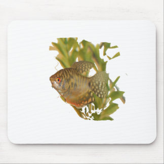 Gold Gourami Freshwater Fish With Green Mouse Pad