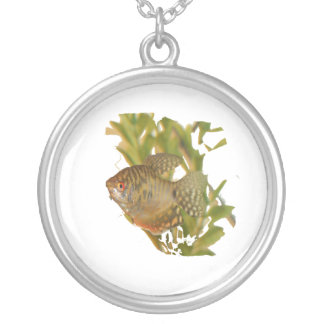 Gold Gourami Freshwater Fish With Green Pendants