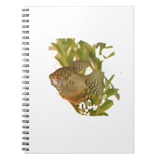 Gold Gourami Freshwater Fish With Green Spiral Notebooks