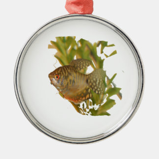 Gold Gourami Freshwater Fish With Green Christmas Ornaments