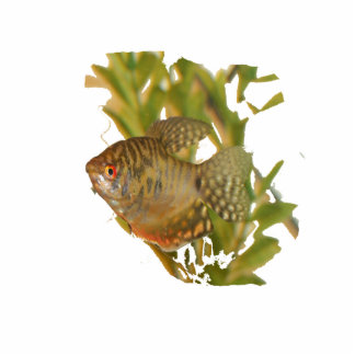 Gold Gourami Freshwater Fish With Green Photo Sculpture