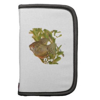 Gold Gourami Freshwater Fish With Green Folio Planners