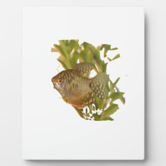 Gold Gourami Freshwater Fish With Green Photo Plaques