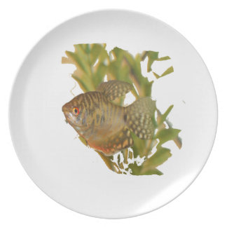 Gold Gourami Freshwater Fish With Green Plate