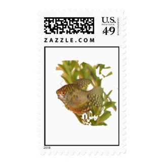 Gold Gourami Freshwater Fish With Green Stamps