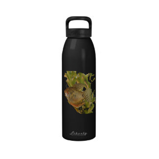 Gold Gourami Freshwater Fish With Green Reusable Water Bottles