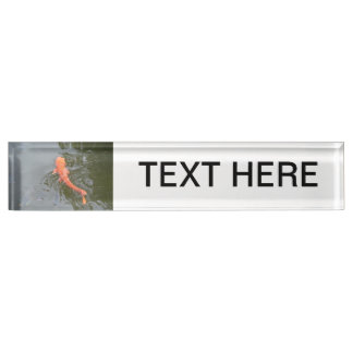gold koi in pond with cichlids fish image picture name plate