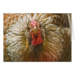 Gold-Laced Wyandotte Hen Greeting Card
