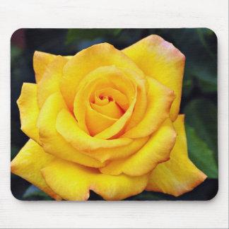 Gold medal Grandiflora Rose, 'Aroyqueli' White flo Mouse Pads