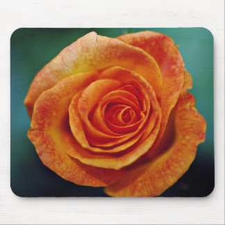 Gold Medal Grandiflora Rose 'Aroyqueli' White flow Mouse Pads