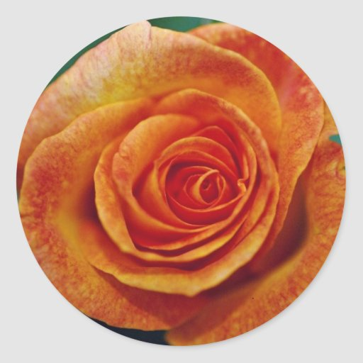 Gold Medal Grandiflora Rose 'Aroyqueli' White flow Sticker