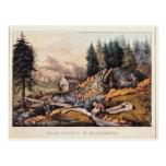 Gold Mining in California Postcard