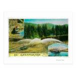 Gold Mining in California StateState Postcard