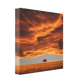 Gold over the sad tree cloud canvas print