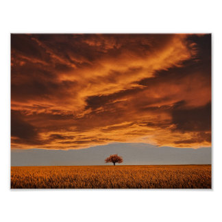 Gold over the sad tree cloud poster
