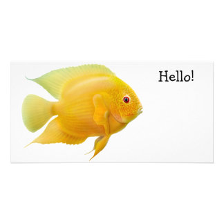 Gold Severum Cichlid Photo Card